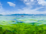 How Animal Waste Is Turning China's Lakes Green