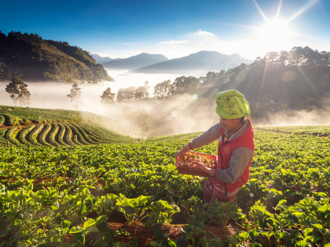 Naturipe Farms Turns to Blockchain for Food Safety, Traceability