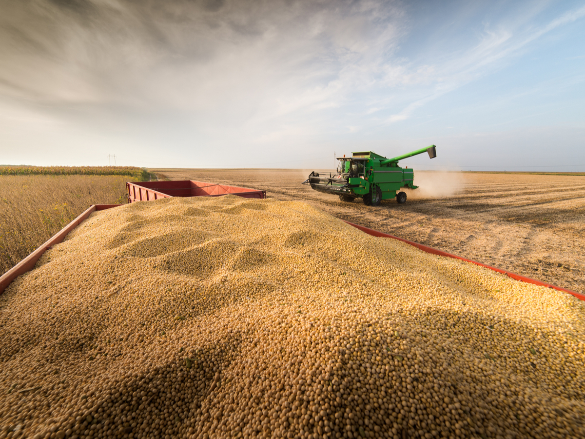 Soy Trade in Disarray as Major Exporter Turns to Imports