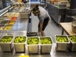 'Smart' or Not, A.I. Is Playing a Crucial Role in Ensuring Food Safety