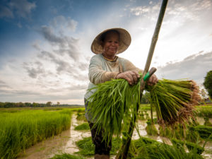 Extending Supply-Chain Innovation to the Small Farmer