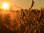 China Buys Two Million Tons of U.S. Soybeans After Trade Talks