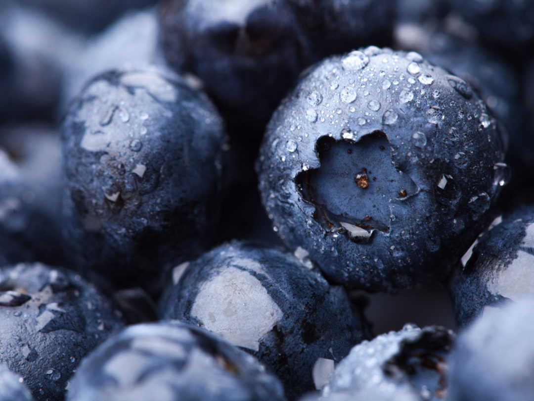 Chilean Blueberry Invasion Reaches China for New Year Celebrations and More