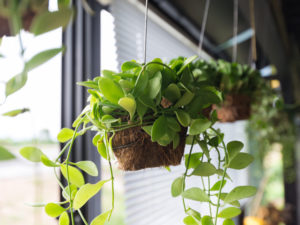 Millennials Rekindle Demand for Plants, an Industry Ripe for Disruption