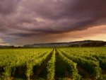 A Wine and Spirits Marketer Seeks Proof of Blockchain