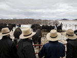'Moneyball for Cattle' Is Creating an American Steak Renaissance