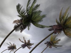 Tropical Storm Dorian Gains Steam as It Powers Toward Barbados