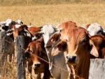 Beef Industry Battles to Scrub Polluter Image as Vegan Burgers Boom