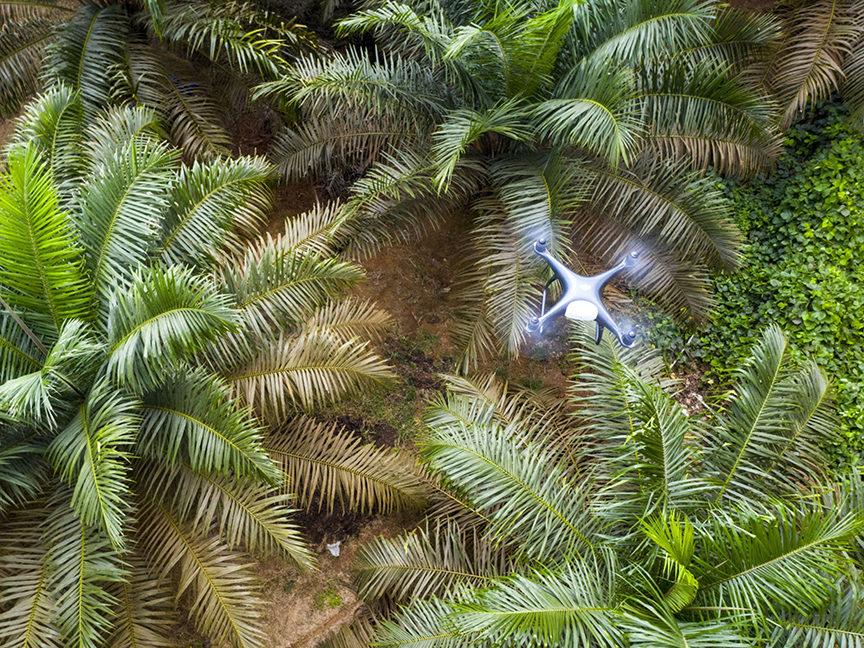 Transforming Palm Oil