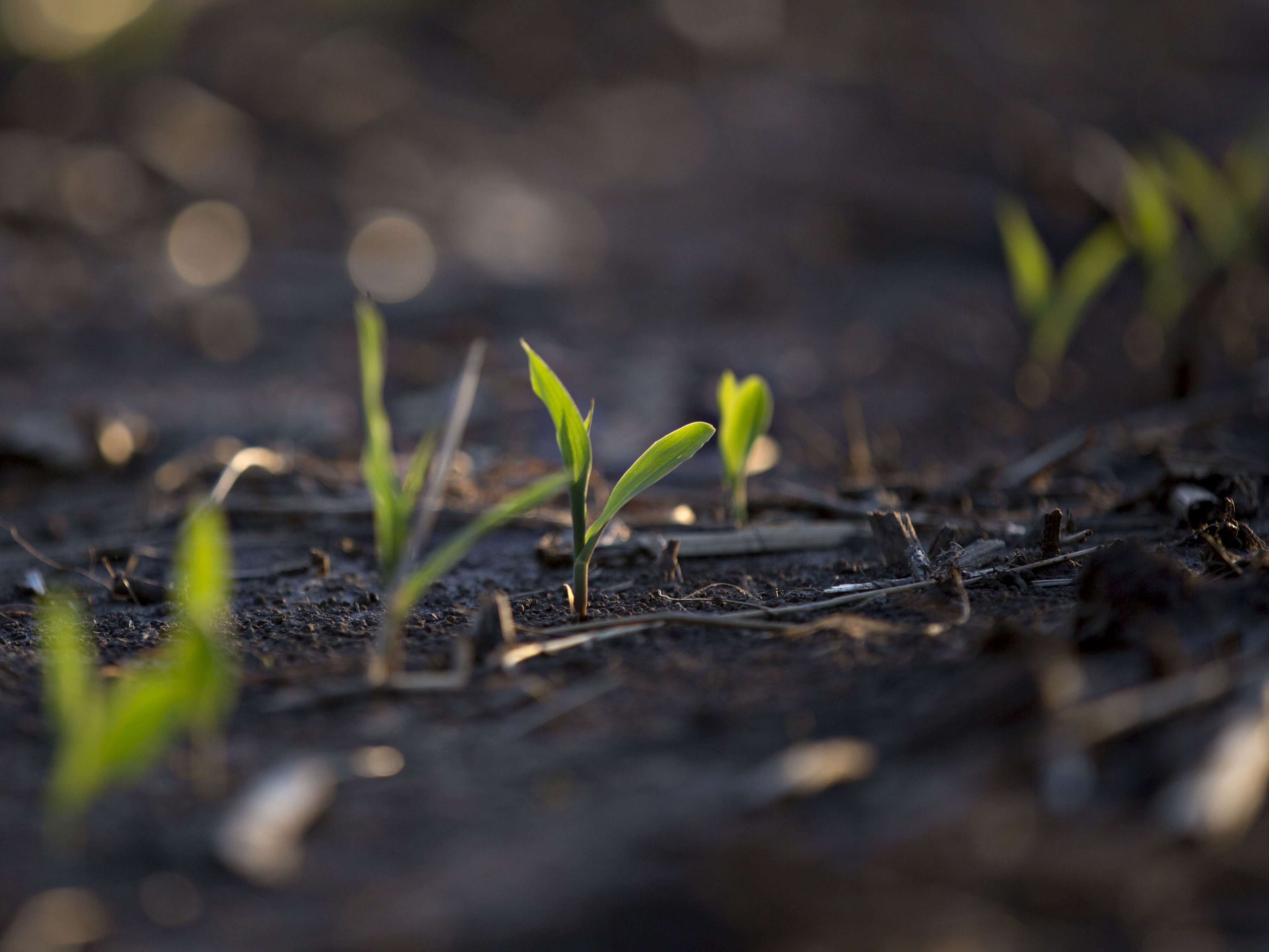 Huge U.S. Crops Show Technology Matters More Than Record Rains