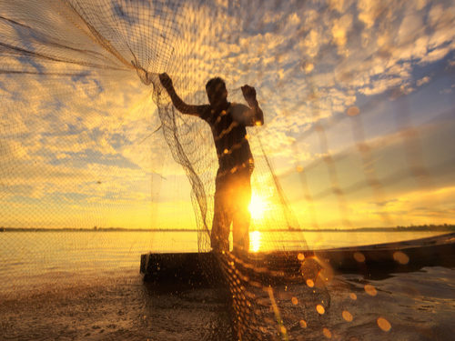 The Rise of Blockchain in Seafood Traceability