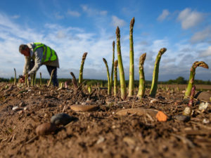 Technology Promises to Transform Farm and Food Industries