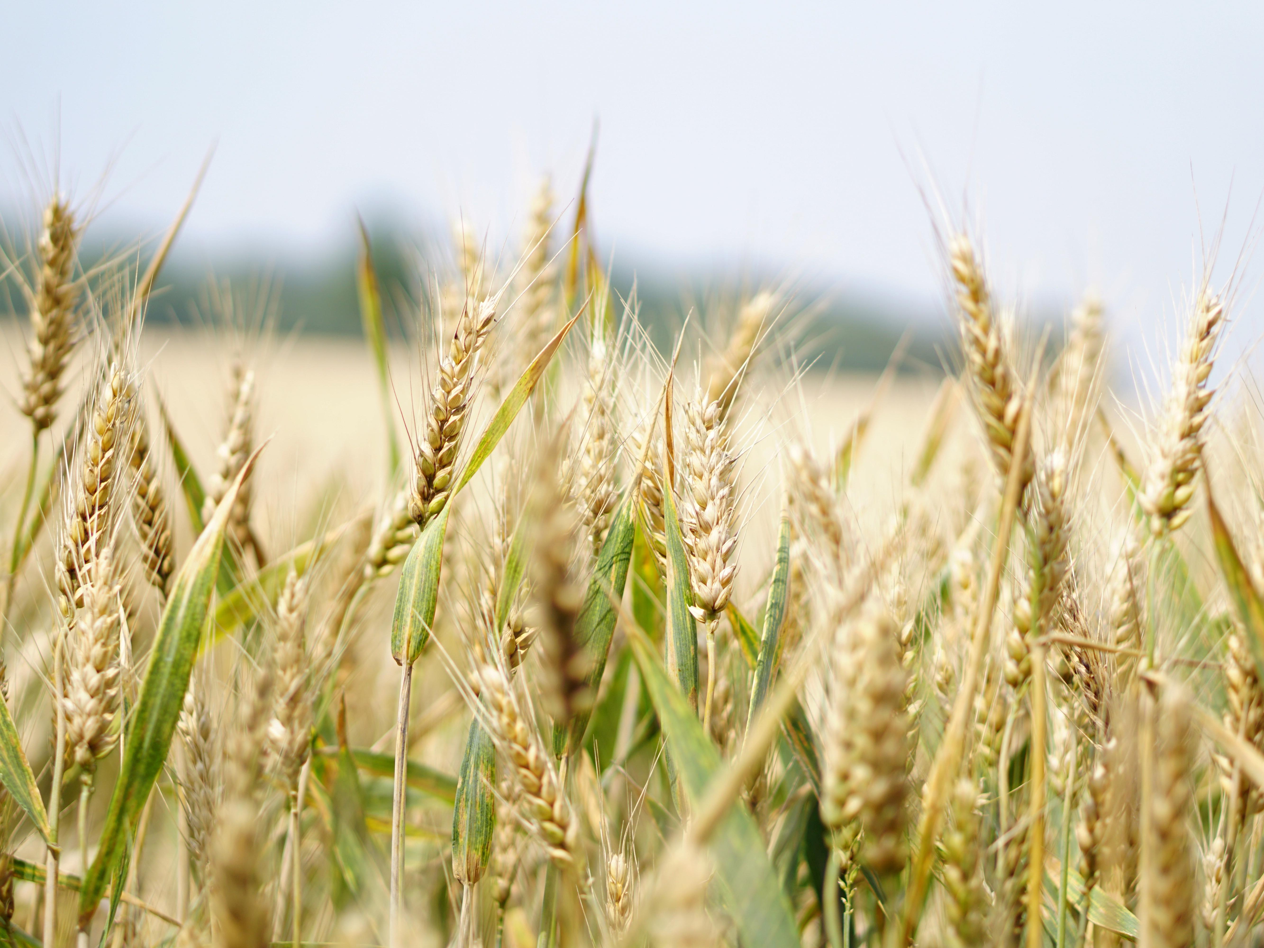 Countries Rush to Hoard Food
