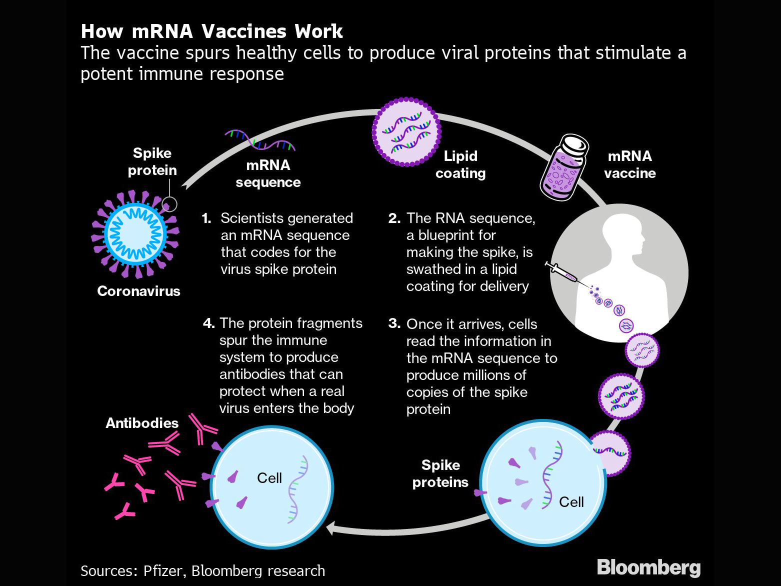 How mRNA Vaccines Work