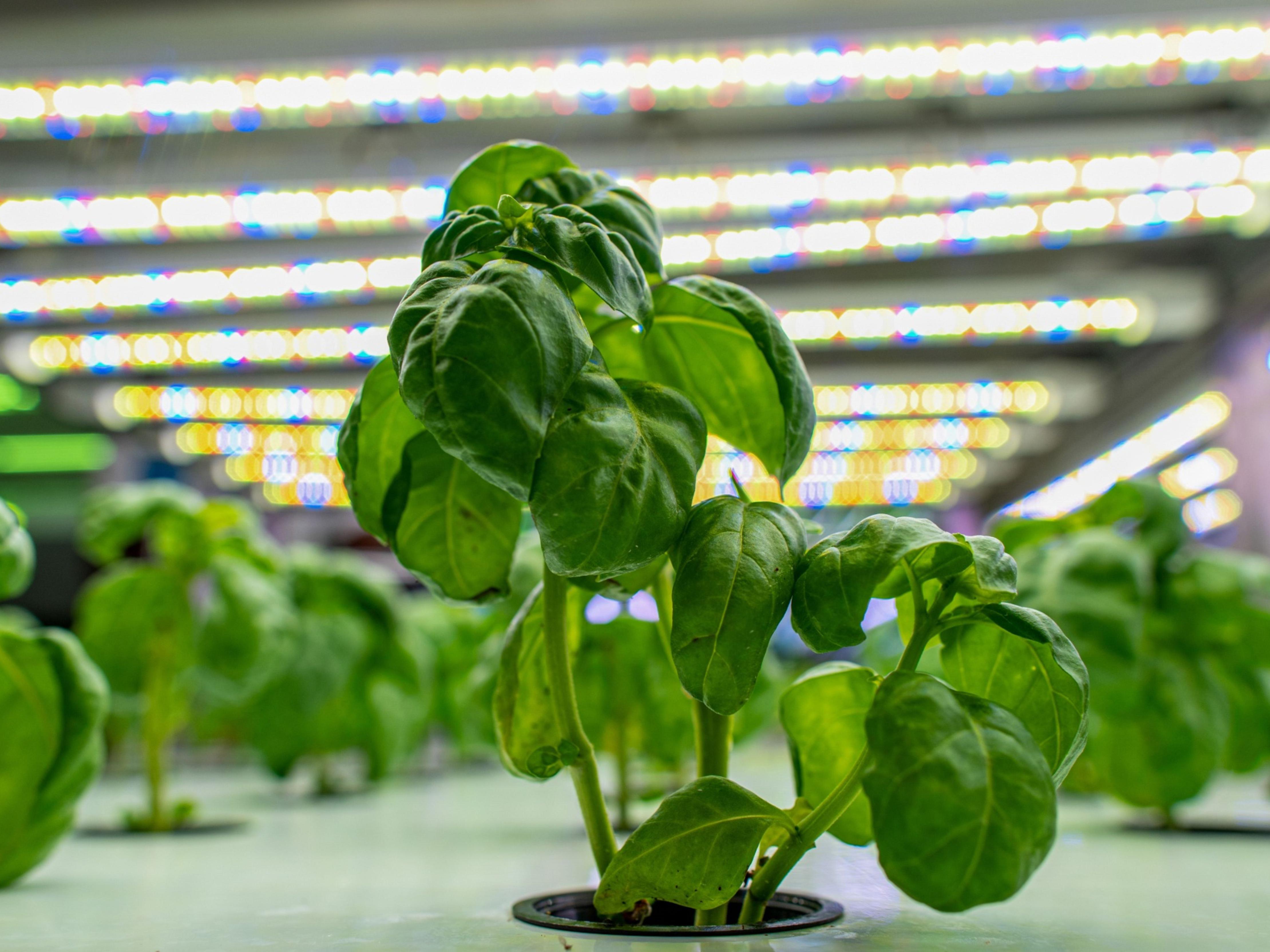 0412 indoorfarm