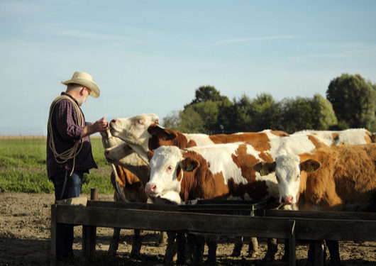 U.S. Ranchers and Meat Packers Could Be the Next Victims of the Trump Trade War